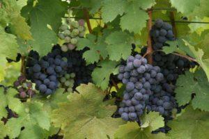 Virginia Wine & Craft festival @ Village Commons