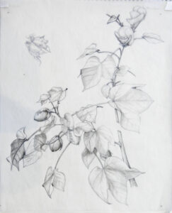 Botanical Drawing with Graphite Pencils @ Art in the Valley
