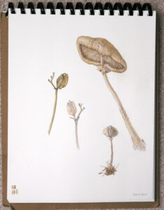 Botanicals in Colored Pencil Workshop @ Art in the Valley