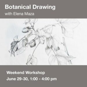 Botanical Drawing Workshop - Summer 2019 @ Art in the Valley